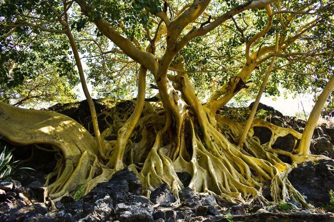 Mezcala Tree blog